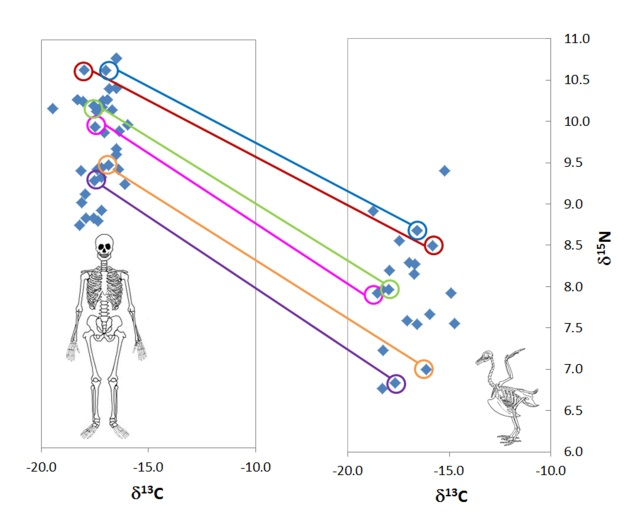 Preliminary carbon and nitrogen isotope results for human burials and associated chickens.
